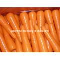 New Harvest Fresh Carrot