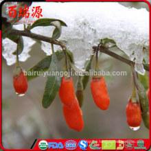 Hot selling ningxia goji berry fresh goji berries goji berries with low price