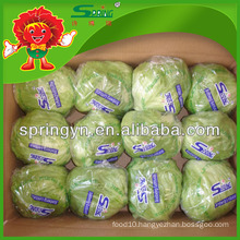 Top Quality Lettuce From the Mountains Iceberg Lettuce