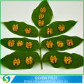 Dried Style and HACCP Certification Hot selling Walnut Kernel