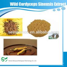 Extrait de Sinensis de Cordyceps sauvage anti-tumeur