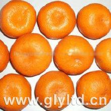 Professioneller Lieferant für frische Baby Mandarine