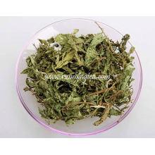Stevia feuilles sèches