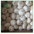 2017 new crop vacuum packed peeled white garic cloves
