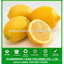 JLM01 semillas de fruta Kingdeli en semillas de limón, semillas de limón
