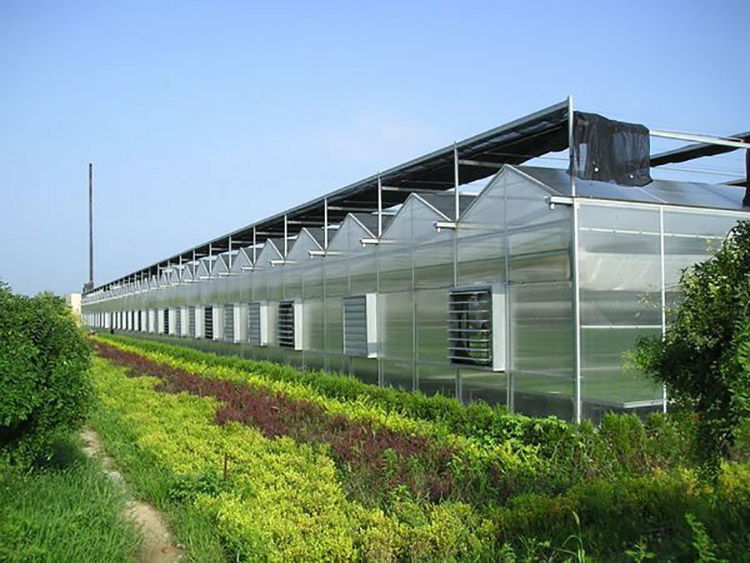 Venlo Multi Span Pc Board Agricultural Greenhouse