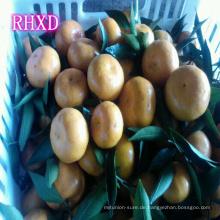 Kino Mandarin Tangerine Orange Zitrusfrüchte aus China