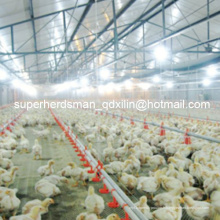 Ensemble complet d'équipement automatique de volaille pour la ferme de poulet