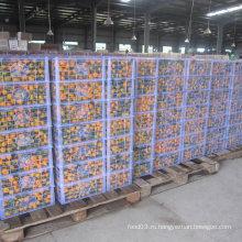 Регулярный поставщик свежего мандаринового мандарина