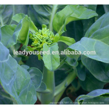 MKL02 Cujing graines de brocoli chinois vente chaude, graines de kailan fleur jaune