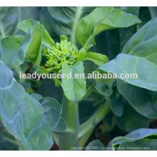 MKL02 Cujing горячая продажа семена китайской брокколи, желтый цветок семена kailan