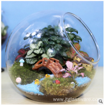 Real Beautiful Functional Plant Terrarium