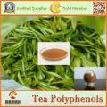 Fabrik-Versorgungsmaterial-natürlicher grüner Tee-Auszug Tee-Polyphenole