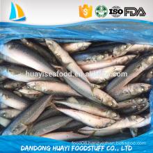frozen 300/500 pacific mackerel