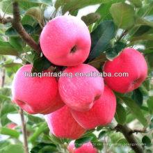 Yantai Apfel