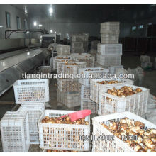Chinese taro market price