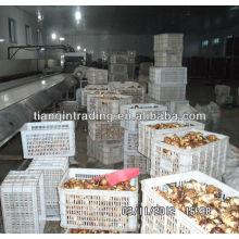 Preço de mercado de taro chinês