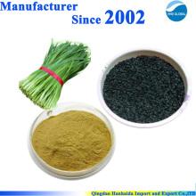 China 100% natürliches Lauch-Samen-Extrakt für Manngesundheit