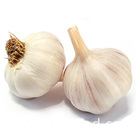 Plain white garlic