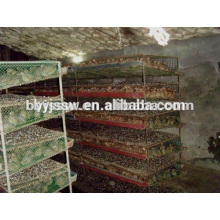 Commerce Assurance Top Vente Cage Quail Transport de bétail