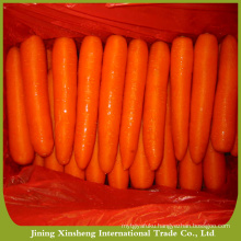 New crop high quality carrot