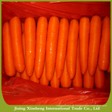 Cenoura fresca especial da venda quente China
