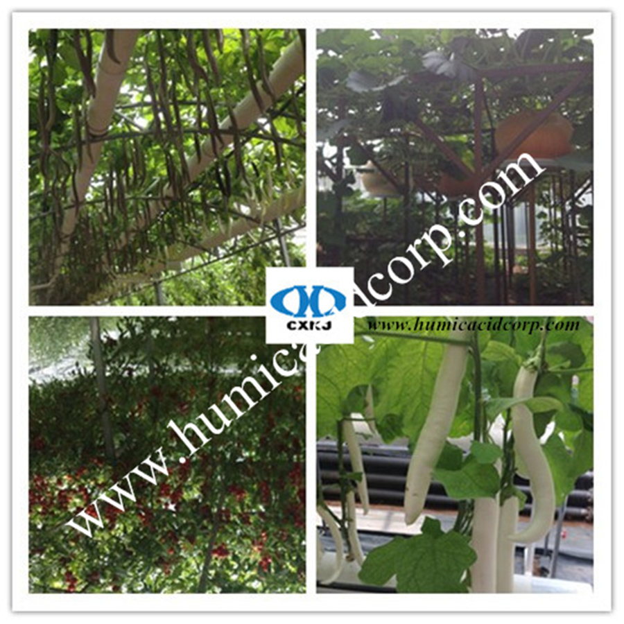 Humic acid application