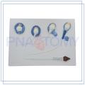 PNT-0571 high quality sperm model