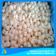 Congelado scallop bay scallop fornecedor