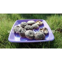 Cogumelo Shiitake suave fresco saudável