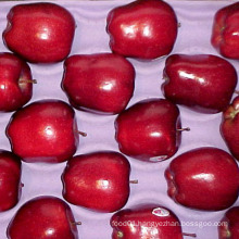 First Quality Red Delicious Apple Supplier