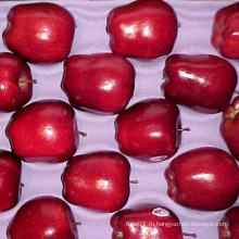 Первый качественный красный вкусный поставщик Apple