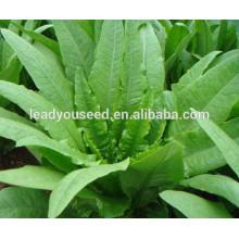 MIL01 Changye graines de laitue indienne résistant à la maladie chinoise pour la plantation