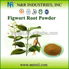 Extracto de raíz de Figwort natural en polvo (Scrophularia ningpoensis)