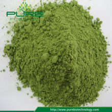 Organic Barley Wheatgrass juice extract powder