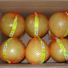 High Quality of New Crop Fresh Honey Pomelo