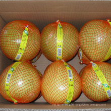 High Quality of New Crop Fresh Honey Pomelo