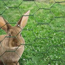 Best Price Galvanized Hexagonal Wire For Rabbits