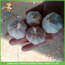 Китайский свежий чистый белый и нормальный белый чеснок Высокое качество и хорошая цена 5,5 см меш сетки в 10 кг коробки