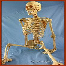 170cm Lebensgröße Menschliches Skelett Medizinische Lehre Anatomie Modell