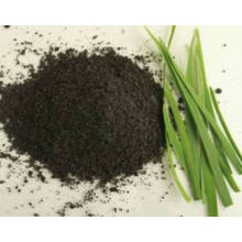 GMP Factory with 100% Pure Natural Leek/Tuber Onion Seed Extract,