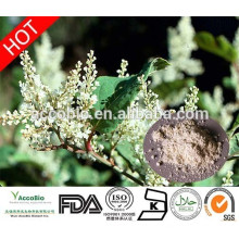 100% Natural Pure Resveratrol 98%, Trans-Resveratrol,Polydatin,Piceid with GMP certificate