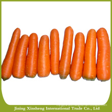 Sell fresh carrot