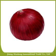 Oignon rouge frais organique chinois