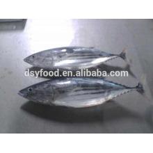 skip jack tuna fish