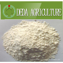 Protéine de riz poudre de protéine de repas Min65%