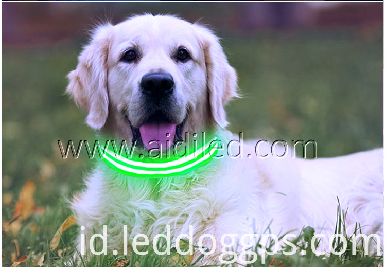 Green Dog Collar