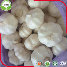 China Shandong Jinxiang fresco novo alho colheita