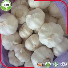 Chine Shandong Jinxiang Fresh Fresh Crop Ail