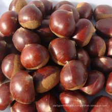 Fresh New Tasty Chestnut From Factory